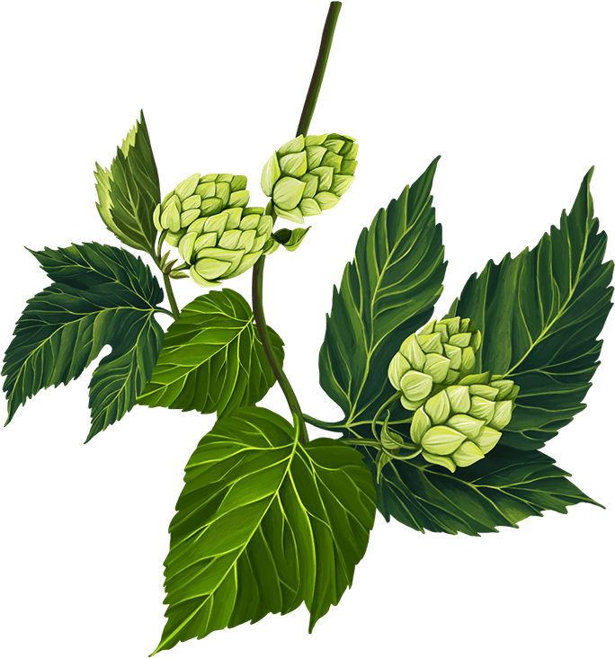 Hop leaf and flower
